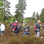 Witley Common guided walk