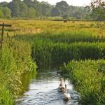 River Wey near Froyle Mill