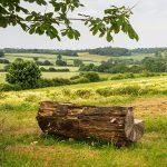 Log seat Froyle
