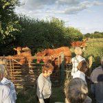 Mill Farm walk 1