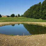 Wildlife pond Aug16